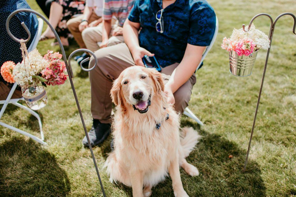 dog sitting in yard during a wedding ceremony